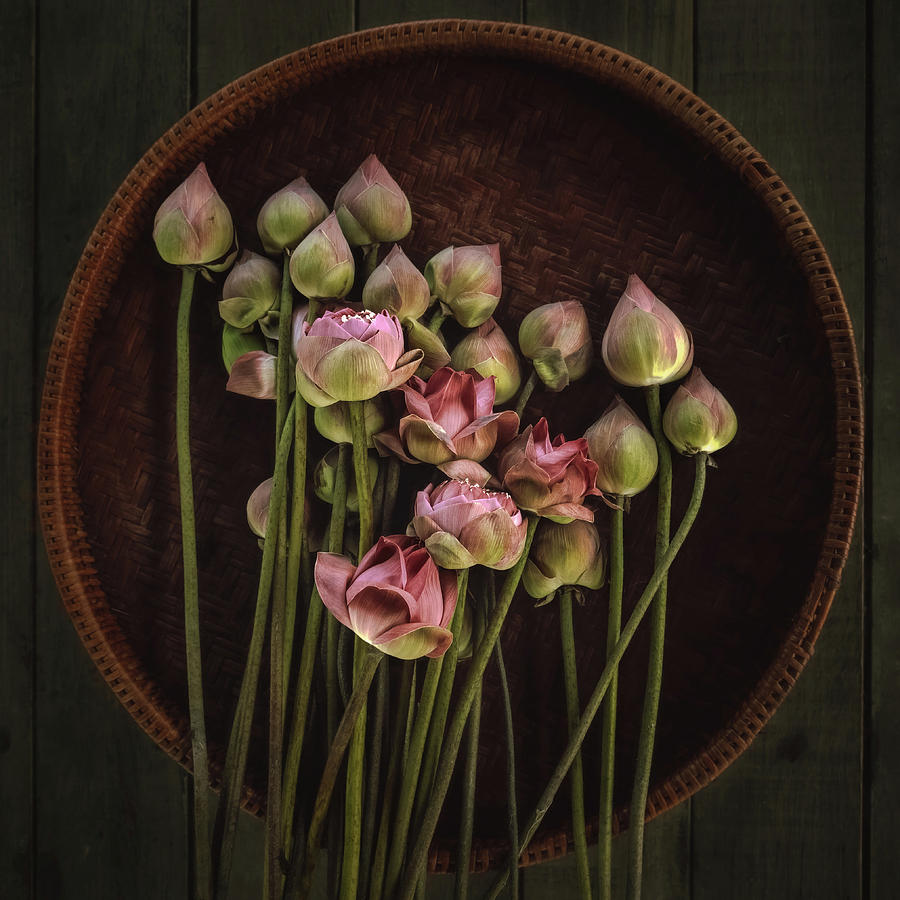 Lotus Photograph - No.18 by Adirek M