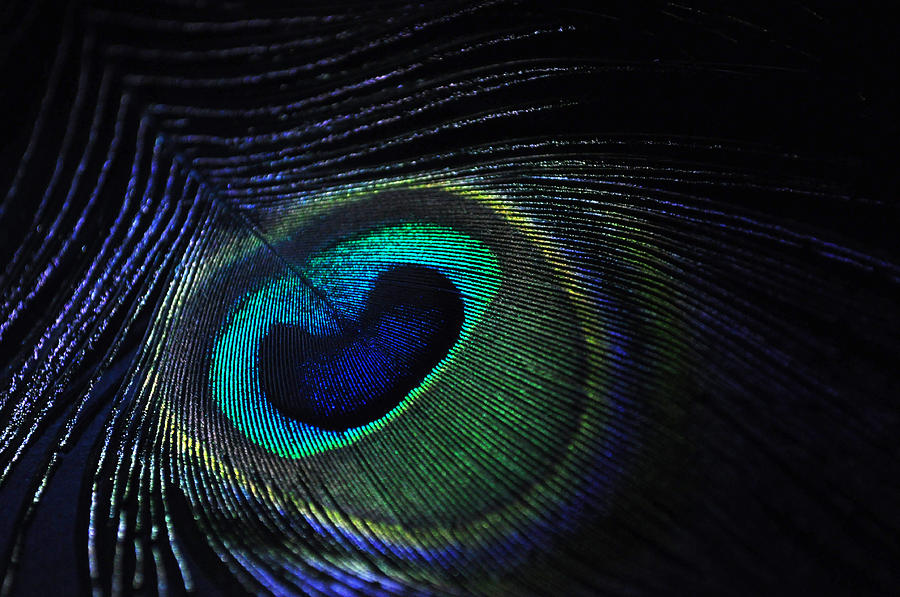 Close-up Photograph - Nocturnal Pavo by Marina Slusar