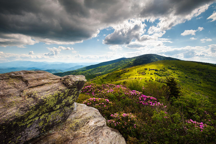 Highlands Photograph - North Carolina Blue Ridge Mountains Roan Rhododendron Flowers Nc by Dave Allen