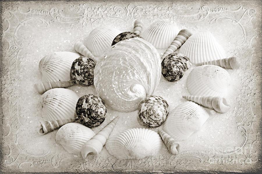 Seashells Photograph - North Carolina Circle Of Sea Shells Bw by Andee Design