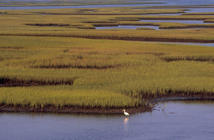 Image result for marsh north carolina