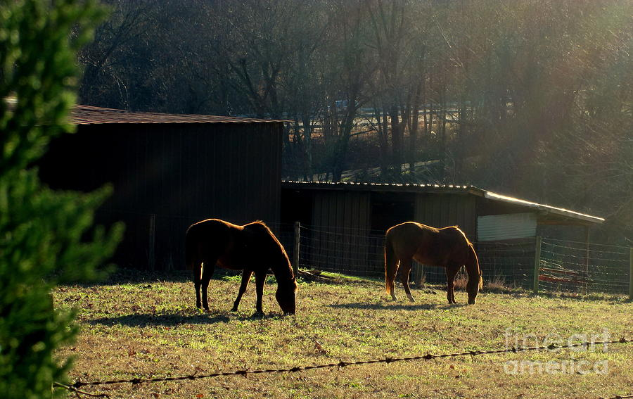 Bill Photograph - North Carolina Morning by Bill OConnor
