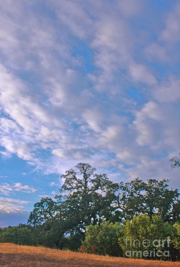 Skyscape Photograph - North Knoll by Gail Salitui