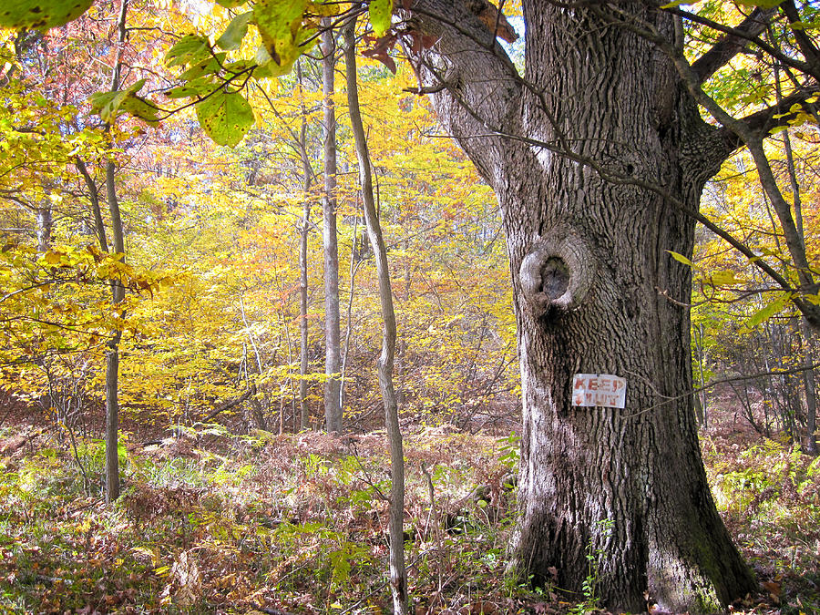 Michigan Photograph - North Woods Guardian by Mary Lee Dereske