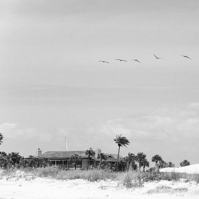 Love Photograph - #northclearwaterbeach #clearwaterbeach by Georgia Fowler