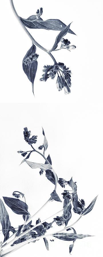 Accent Photograph - Northern Bluebells by Priska Wettstein