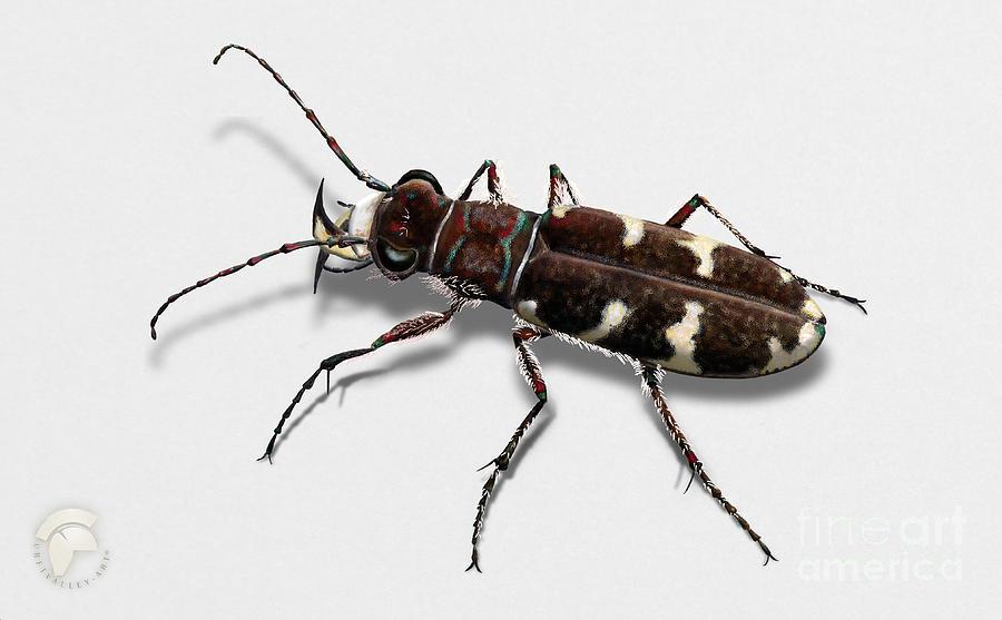 Northern Dune Tiger Beetle Cicindela Hybrida - Coleoptere Cincidele Hybride -sandjegere Loepebillene Painting