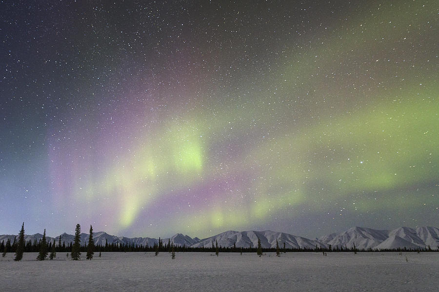 Northern Lights Alaska Range Denali Photograph by Ingo Arndt