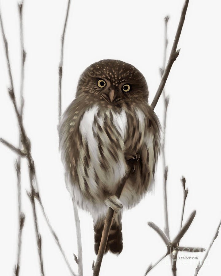 Northern Pygmy Owl Painting - Northern Pygmy Owl - Little One by Beve Brown-Clark Photography