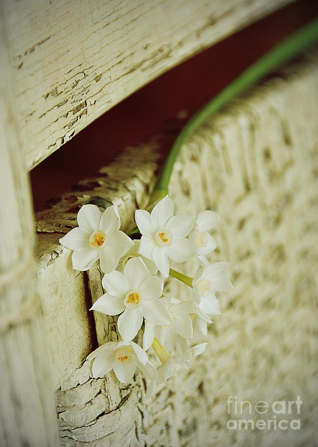 Paperwhite Photograph - Nostalgic Paper Whites by Carla Parris