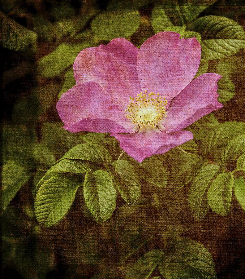 Photo Photograph - Nostalgic Rose by Karen Stephenson