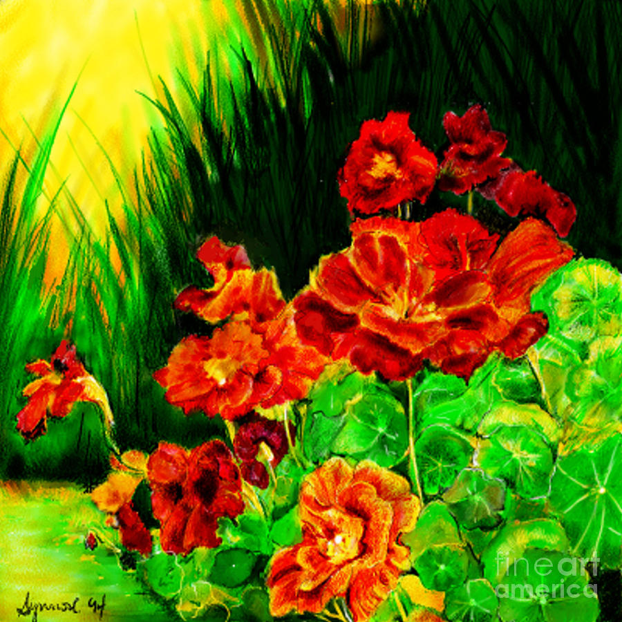 Nosturtiums by Synnove Pettersen