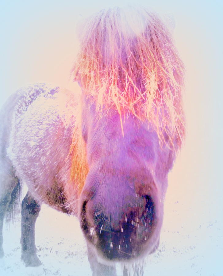 Horse Photograph - Im The Famous Winter Nosy Spirit But I Dont Care  by Hilde Widerberg