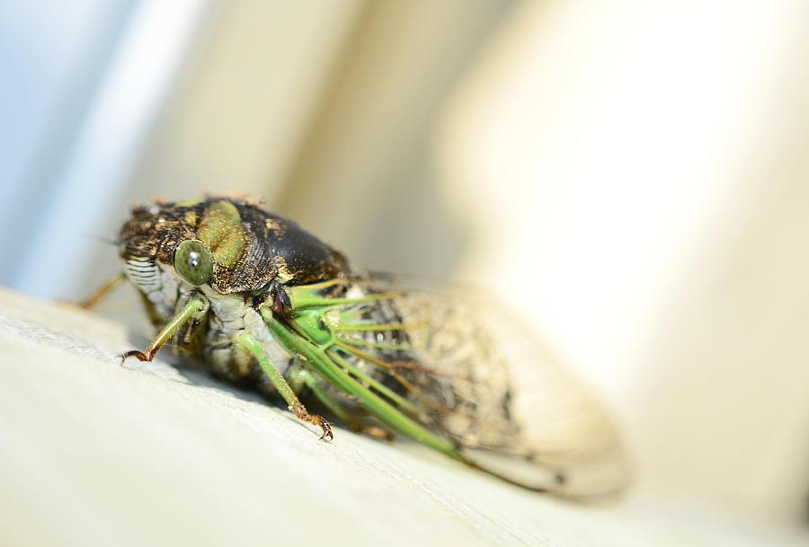 Cicada Photograph - Not A Cute Bug by Lori Tambakis
