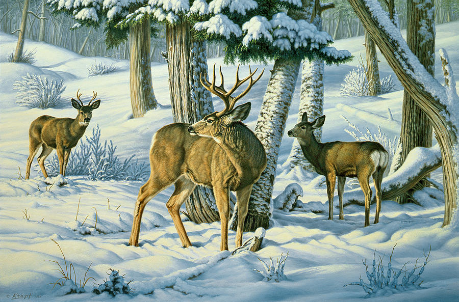 Wildlife Painting - Not This Year - Mule Deer by Paul Krapf