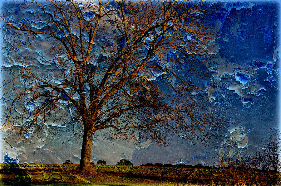 Landscapes Photograph - Nothing But Blue Skies by Jan Amiss Photography