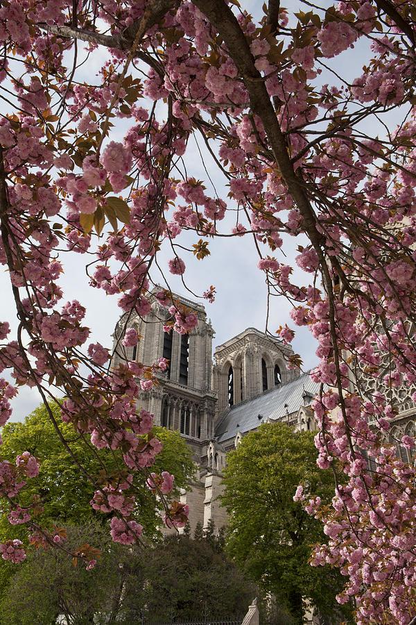 Paris Photograph - Notre Dame 1 by Art Ferrier