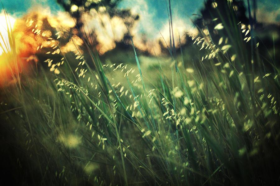 Nature Photograph - Nouvelle Vague by Taylan Apukovska