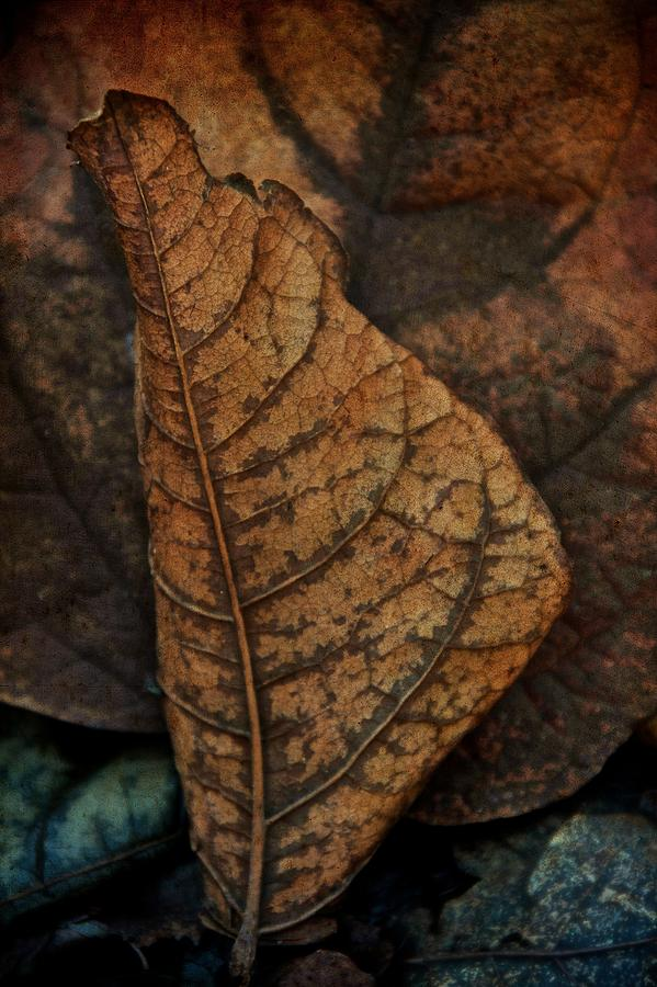 Leaf Photograph - November In Leather by Odd Jeppesen