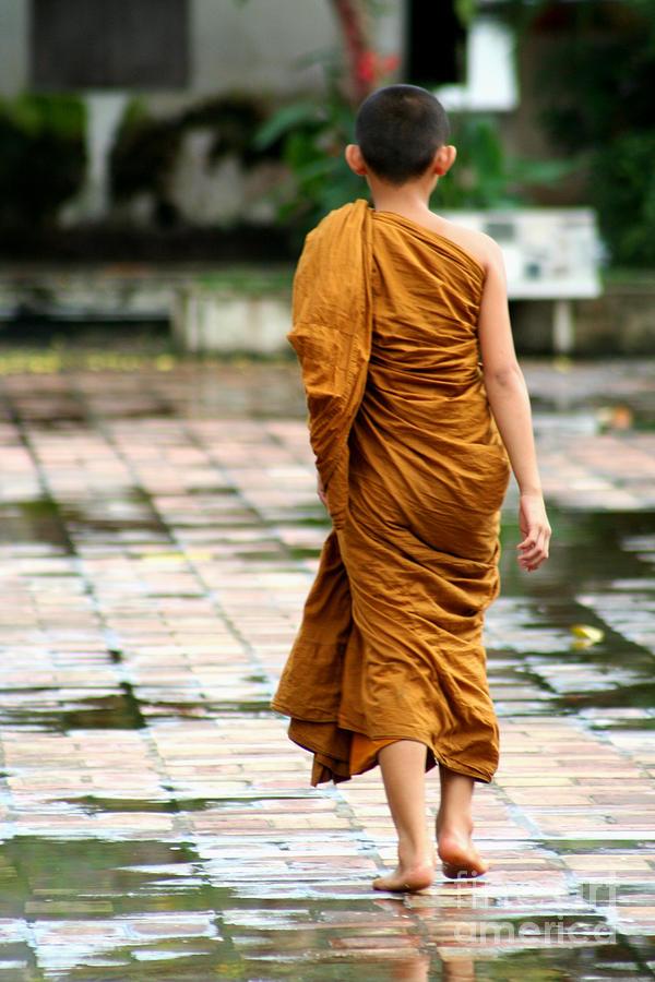 Novice Monk Of Chedi Luang Photograph