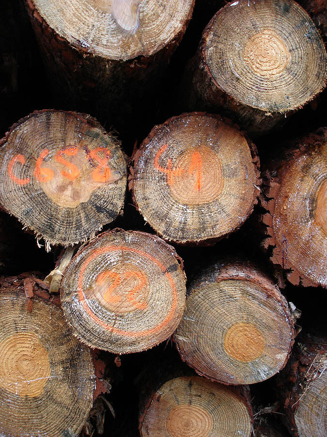 Nature Photograph - Number Logs by Michel Mata