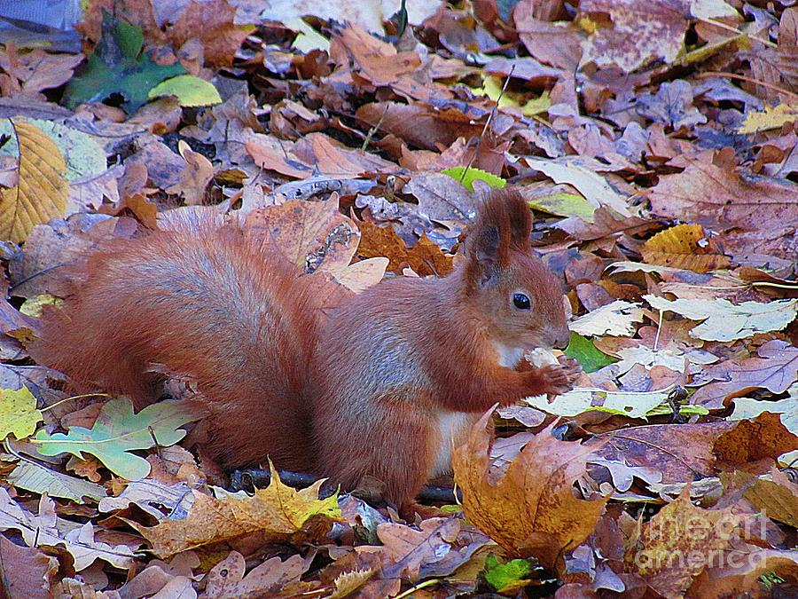Autumn Photograph - Nuts About Nuts by Halyna  Yarova