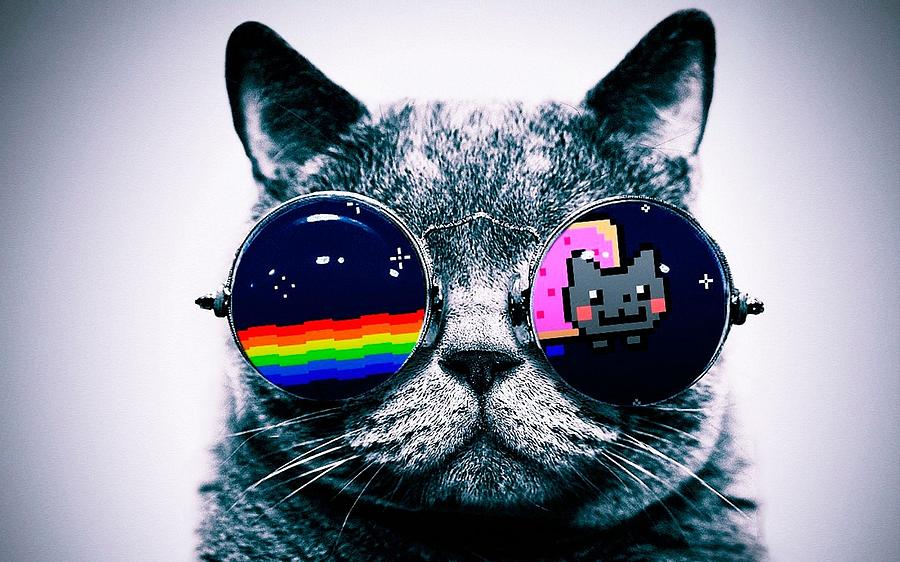 Nyan Cat Photograph by Dj Vasilika