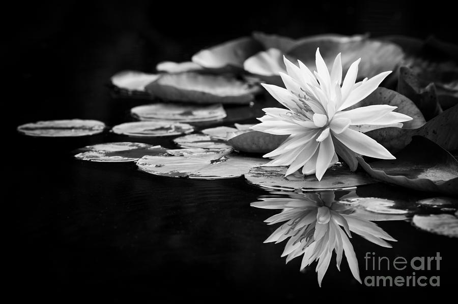 Hardy Photograph - Nymphaea Maria by Tim Gainey