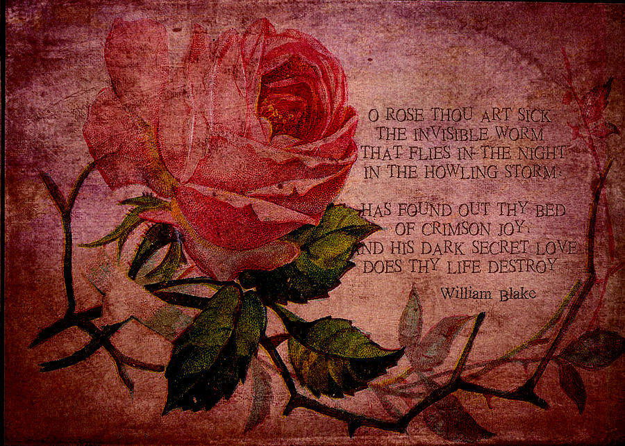 Rose Digital Art - O Rose Thou Art Sick by Sarah Vernon