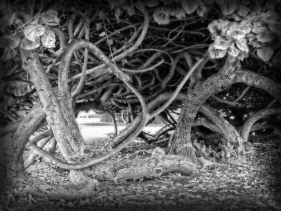 Vines Photograph - Oahu Ground Vines - Hawaii by Daniel Hagerman