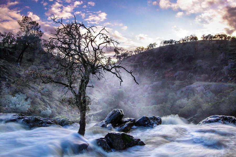 Oak Above The Falls by Mark Robert Bein