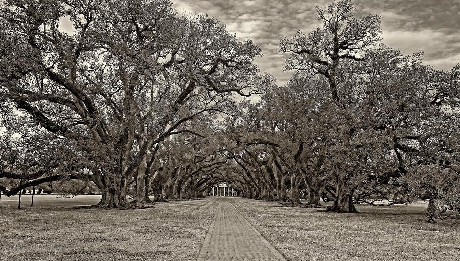 Oak Alley Plantation Photograph - Oak Alley 3 Sepia by Steve Harrington
