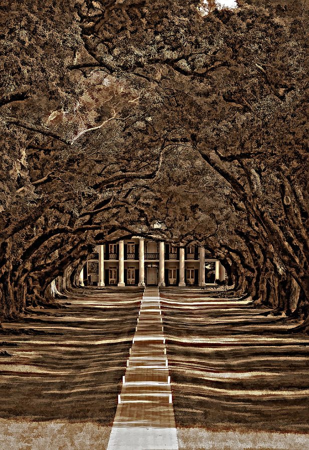 Oak Alley Plantation Photograph - Oak Alley Bw by Steve Harrington