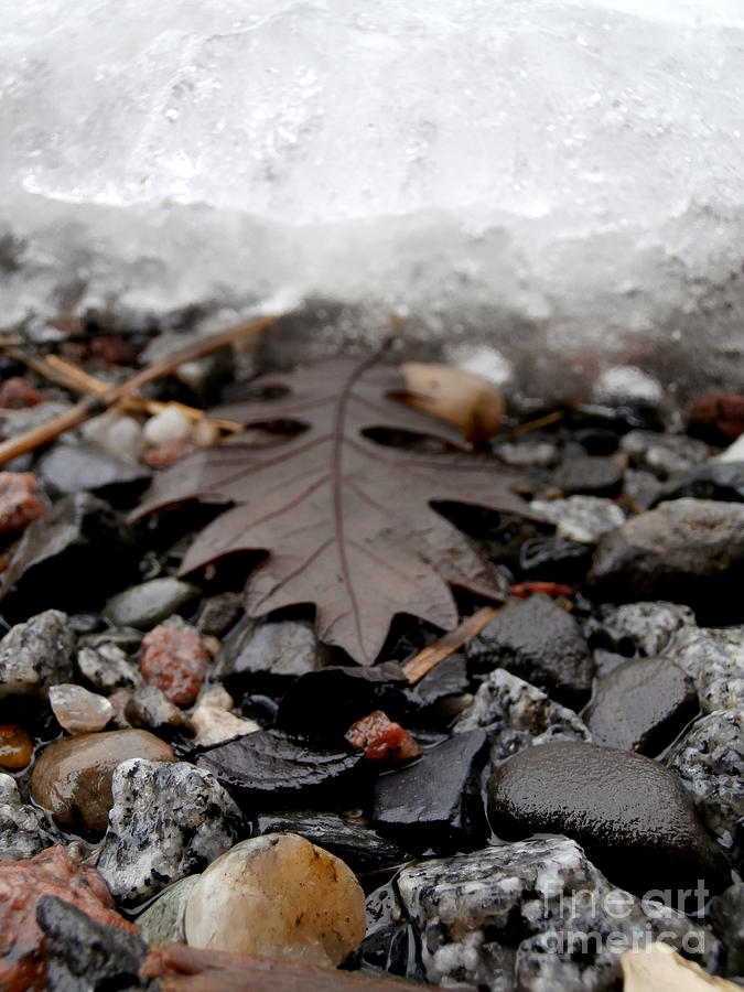Macro Photography Photograph - Oak Leaf On A Winters Day by Steven Valkenberg