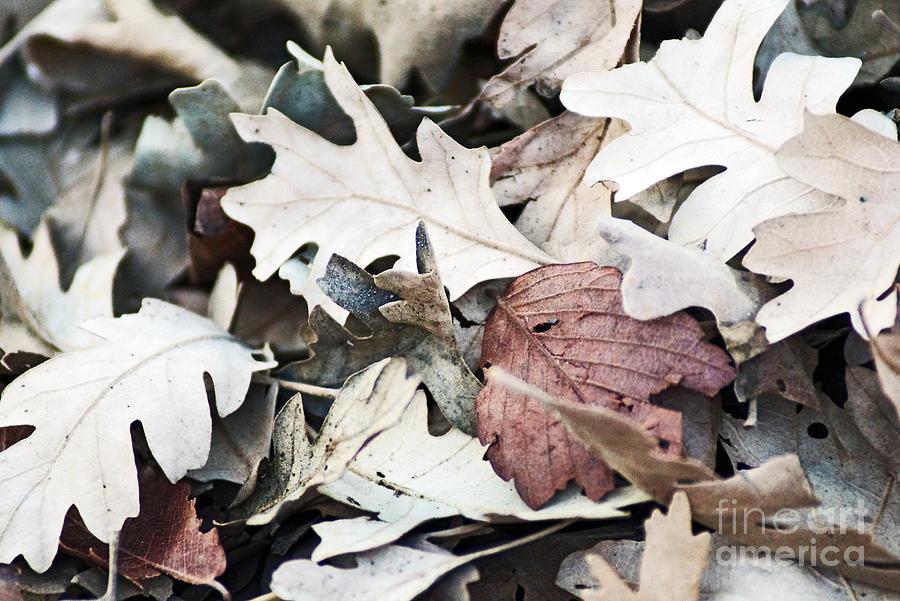 Oak Leaves in Fall by Gary Brandes
