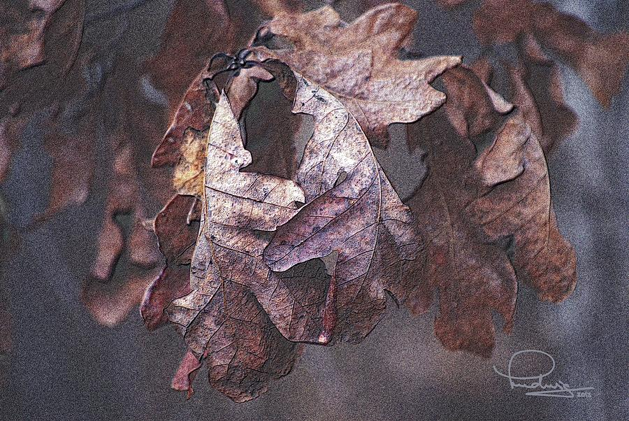 Oak Leaves by Ludwig Keck