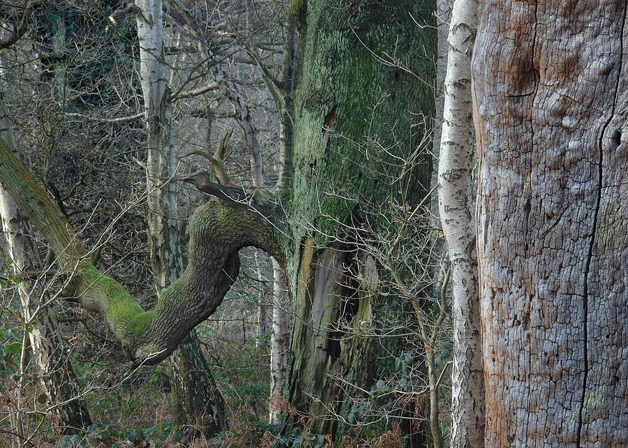 Oak Sherwood forest by Jerry Daniel