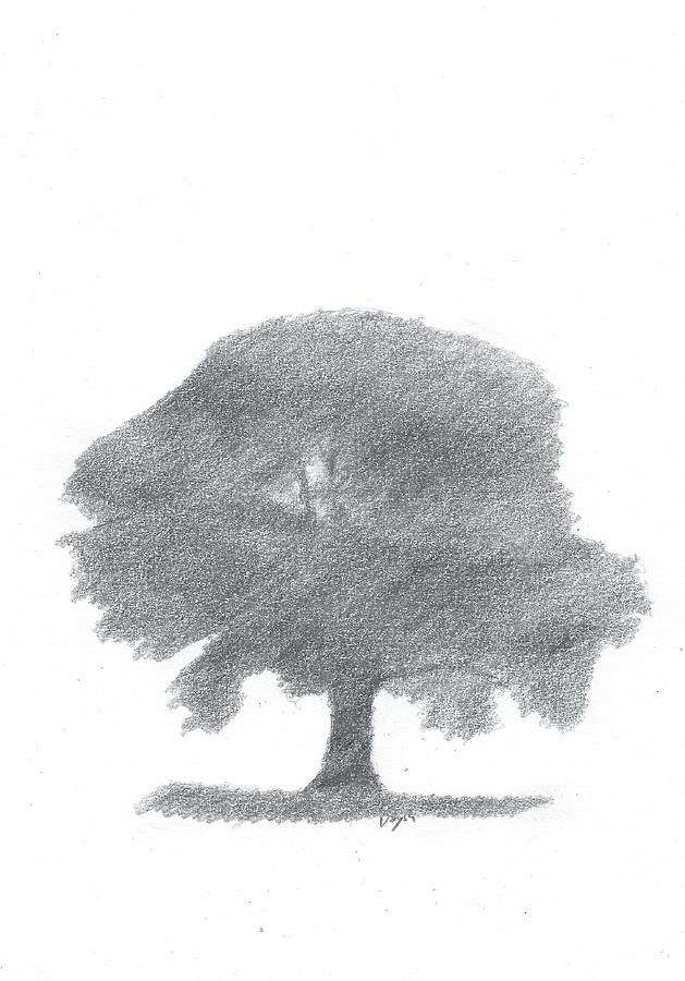 Drawings  Painting - Oak Tree Drawing Number Four by Alan Daysh