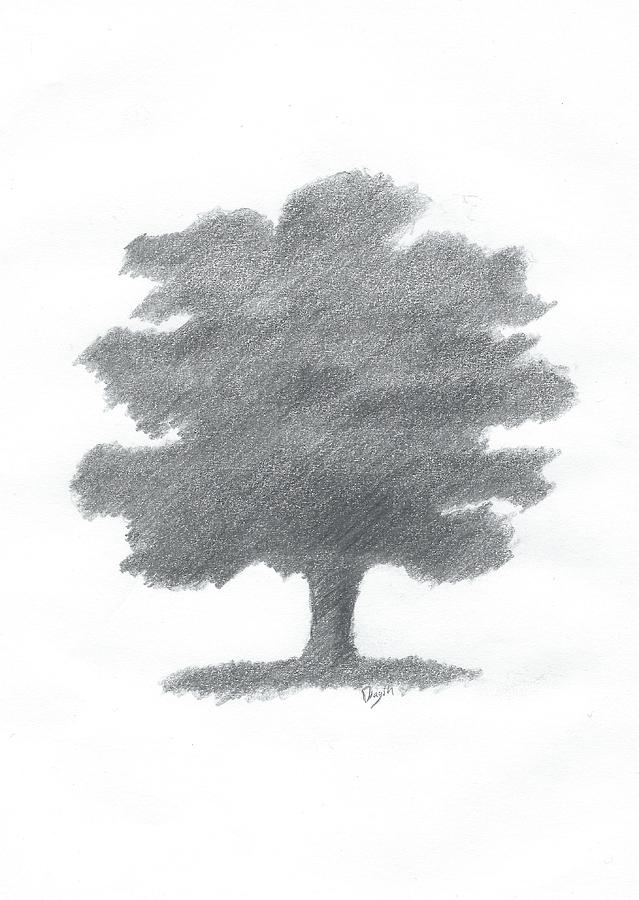 Oak Tree Drawing Painting - Oak Tree Drawing Number Seven by Alan Daysh