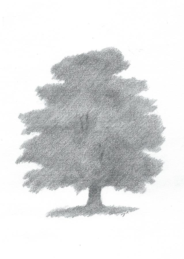 Oak Tree Drawing Painting - Oak Tree Drawing Number Six by Alan Daysh