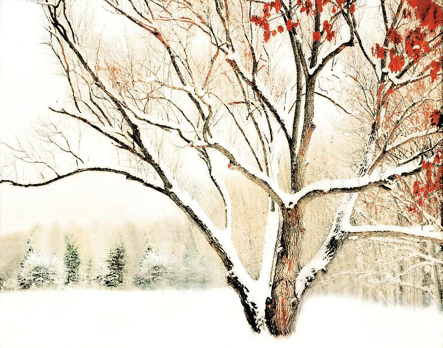 Oak Tree Photograph - Oak Tree In Winter by Dorothy Walker
