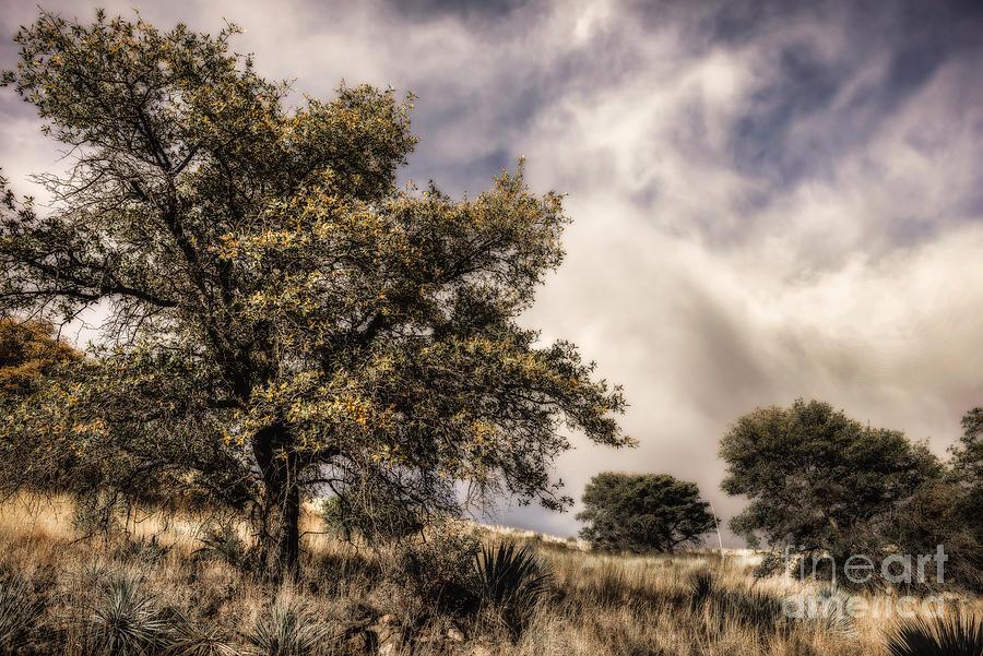 Oak Tree On Grassy Hill Photograph