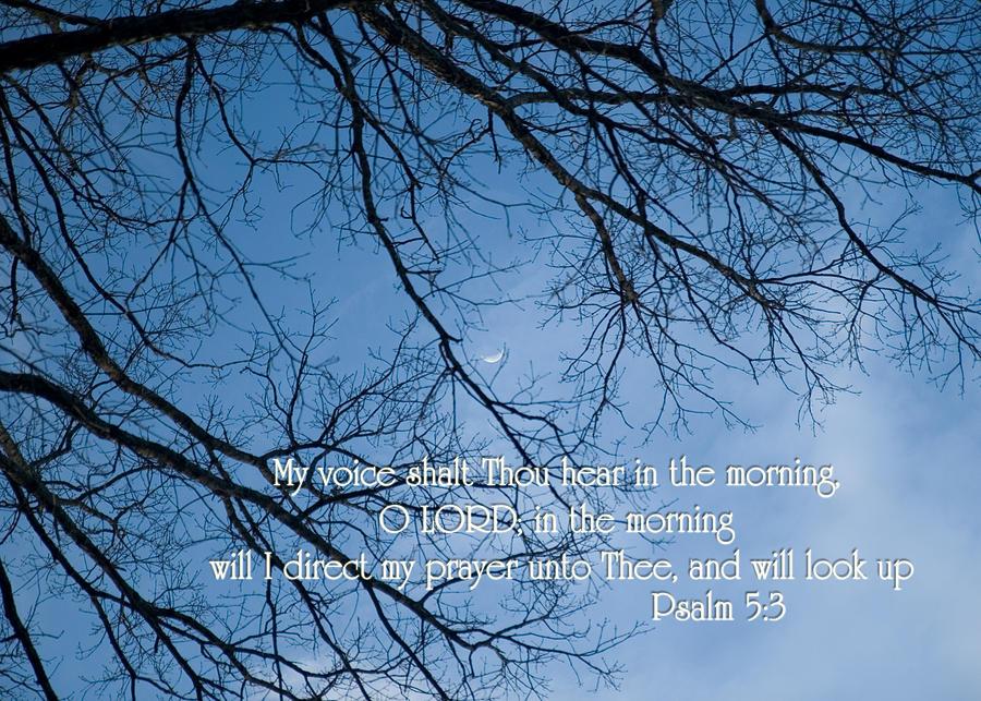 Tree Photograph - Oak Tree Psalm by Denise Beverly
