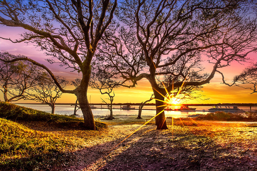 Boats Photograph - Oak Trees At Sunrise by Debra and Dave Vanderlaan