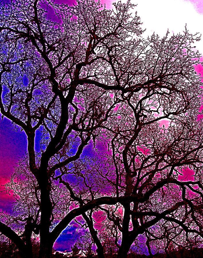 Trees Photograph - Oaks 6 by Pamela Cooper