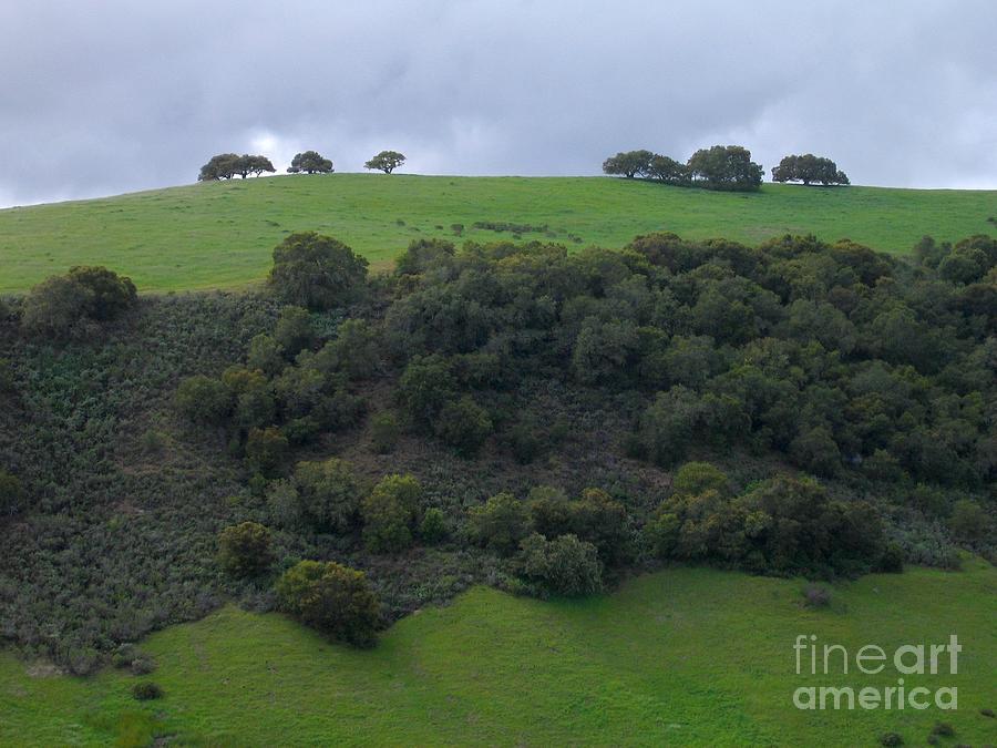 Carmel Valley Photograph - Oaks On A Ridge by James B Toy