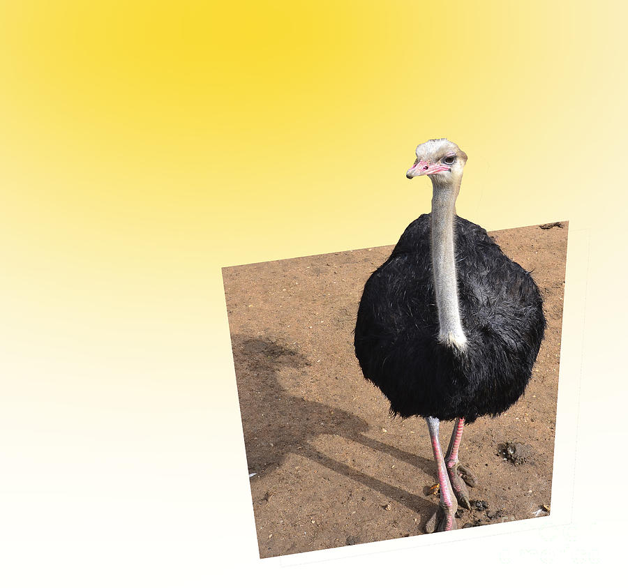 Ostrich Photograph - Oastrich 3d by Stefano Piccini