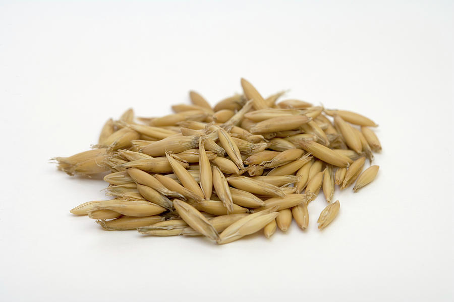 Oat Seeds (avena Sativa) Photograph by Science Stock Photography ...