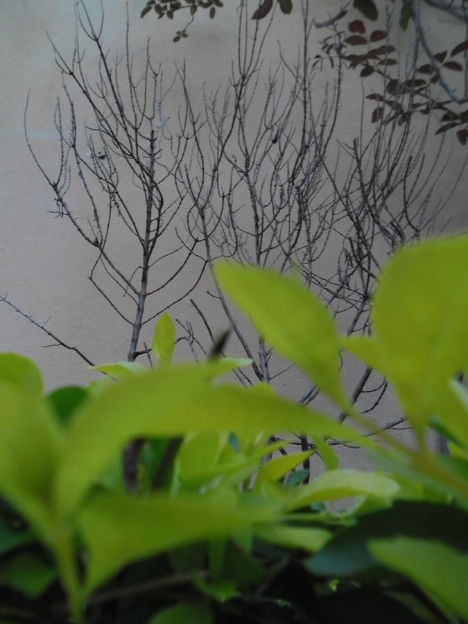 Plant Photograph - Observateur by Beto Machado
