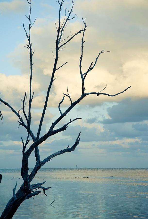 Abstract Photograph - Ocean Tree by Zina Zinchik